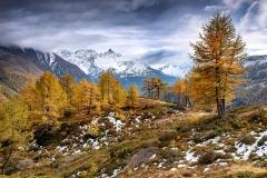Goldene Lärchen im Puschlavtal - ©Christiane Dreher