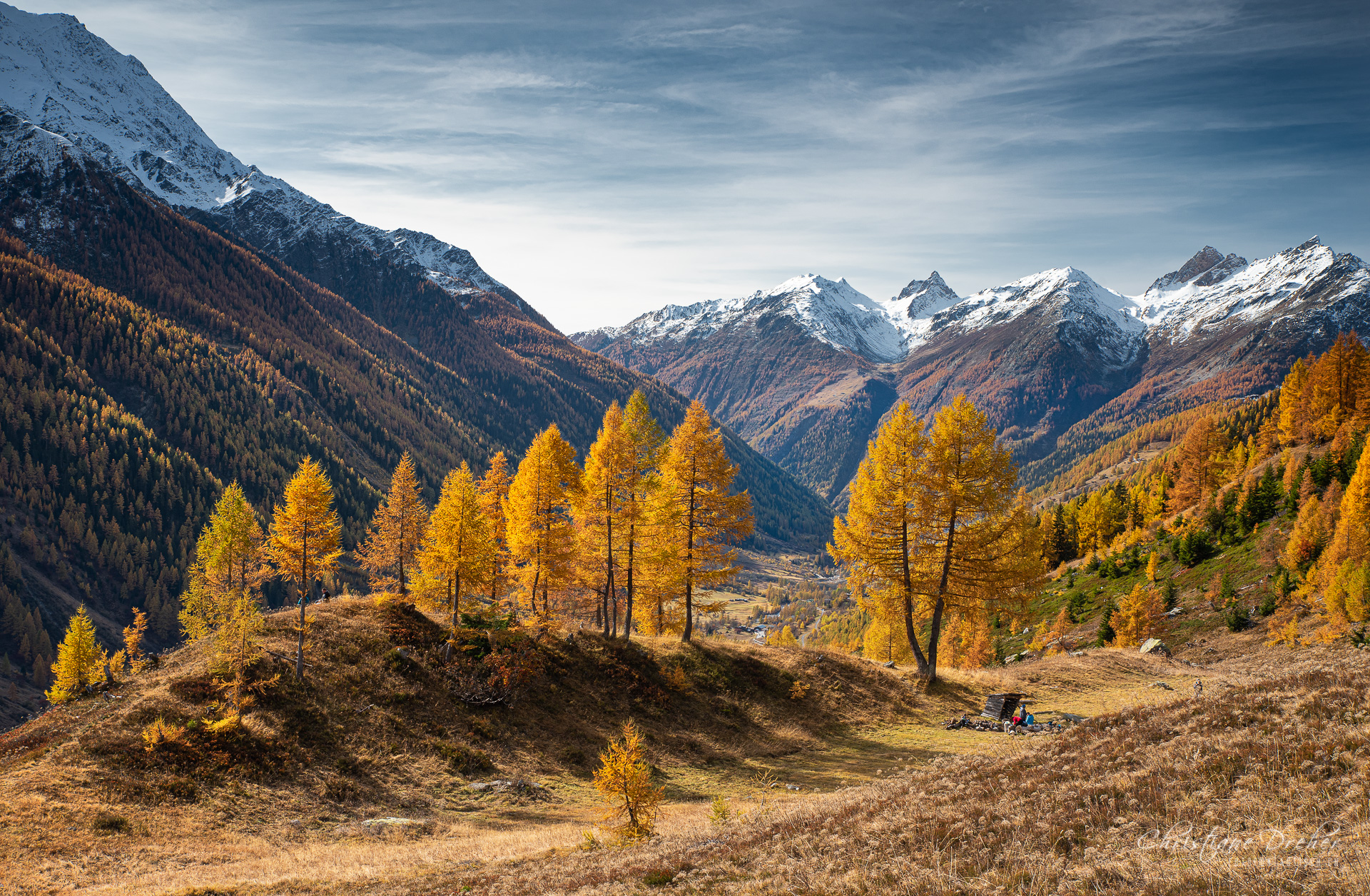 Lärchen im Herbst